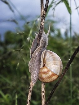 Nature, Animal, Snail, Green, Brown, Slimy, Climb