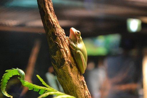 Frog, Green, Amphibian, Nature, Animal, Wildlife, Slimy