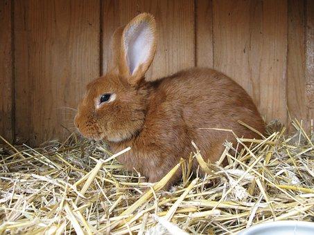 Hare, Animal, Rabbit, Easter Bunny, Fur, Stall