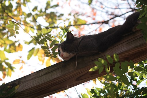 Cat, Arboreal, Adorable, No People, One Animal