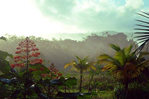 French Guiana, Rainforest, Forest, Guiana, Guyana