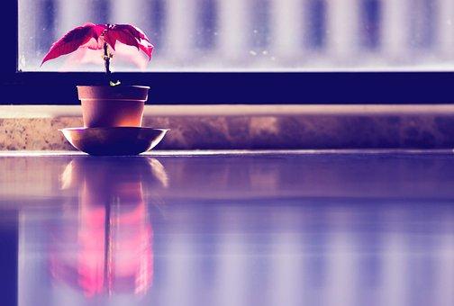 Interior, Plant, Red, Reflection, Reflex, Window