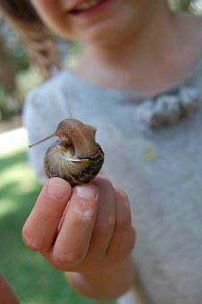 Snail, Girl, Hand, Child, Little, Mollusk, Slimy