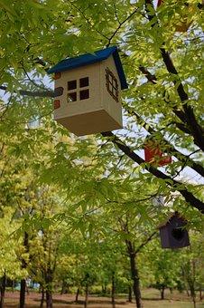 Tree, Niche, Spring, South Korea, Korea, Asia, Travel
