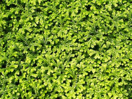 Background, Bright, Close, Close Up, Close Up Leaf
