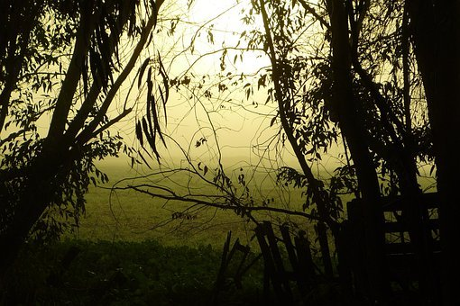 Restlessness, Mystery, Fog, Trees, Field, Countryside