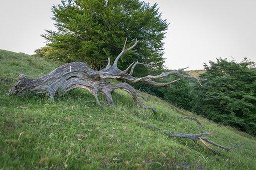 Rod, Old, Wood, Hills, Summer, Viborg, Denmark, Natural