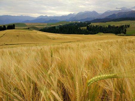 Wheat, Mountain, Dark Clouds, Jiang Burak