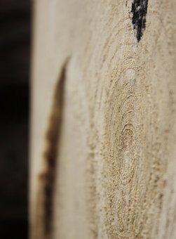 Wood, Strain, Tree, Rings, Losers, Trunk, Macro