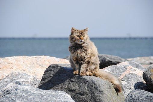 Cat, Feral, Beach, Rocks, Outdoor