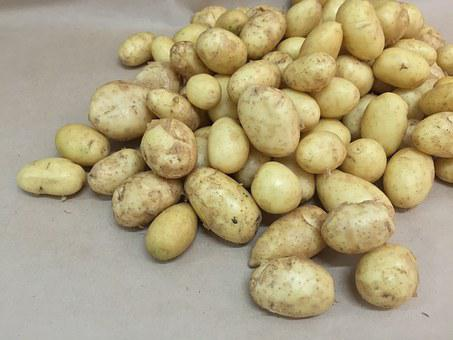 Potatoes, Young, Potato, Tubers, Tuber, Beige