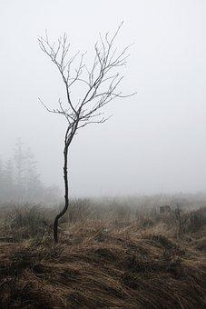 Fog, Root, Autumn, Nature, Mystical, Mood, Atmosphere