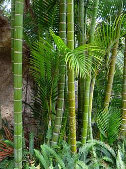 Bamboo, Giant Bamboo, Bamboo Trees, Tree, Log, Tropical