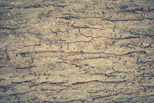 Abstract, Antique, Backdrop, Background, Bark, Board
