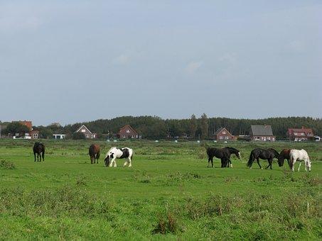 Horses, Pasture, Palomino, Borkum