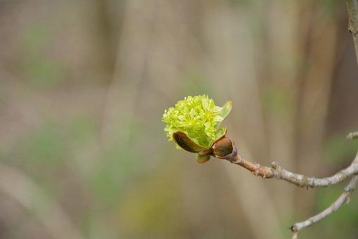 Green, Single Bloom, Close, Branch, Bud, Sprind