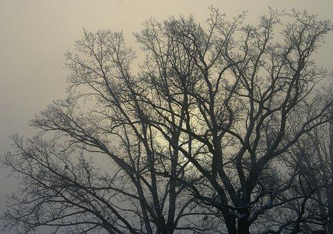 Tree, Branches, Winter, Konary, Leafless, Nostalgia