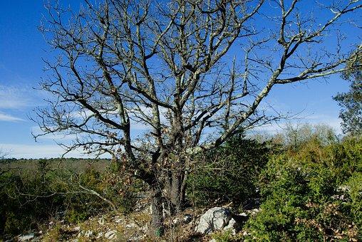Dead Tree, Maquis, Scrubland, Bushes, Boxwood