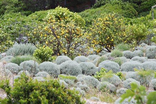 Field, Orange, Corsican, France, Wild Plants, Maquis