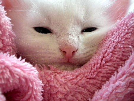Kitten, Cat, Fluffy Cat, Cute, Animals, Cats, Fur