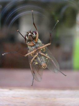 Insect, Fly, Legs, Hair, Sensors, Door, Window, Mirror
