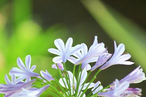 Flower, Corsican, Nature, Island Of Beauty, Landscape