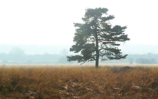 Fog, Autumn, Mood, Atmosphere, Autumn Light