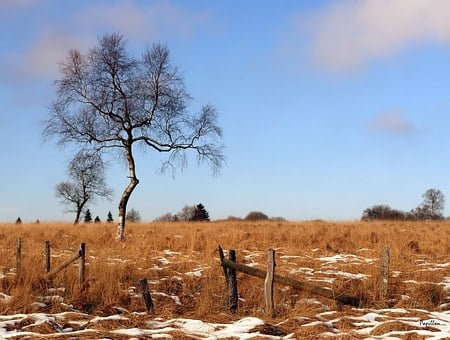 Moor, Nature, Recovery, Birch, Landscape, Swampy