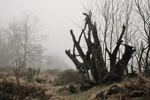 Fog, Root, Tree Root, Autumn, Nature, Mystical, Mood