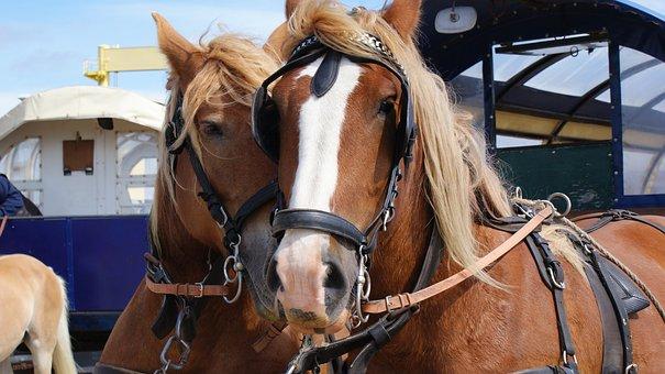 Horses, Animals, Nature, Island Island, North Sea