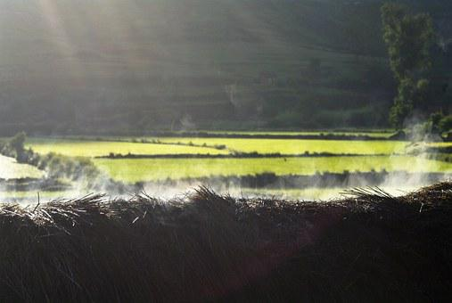 Morning, Smokey Thatch, Lightbeam, Rice Field