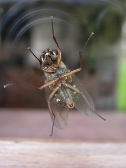 Insect, Fly, Legs, Hair, Sensors, Door, Window, Mirror