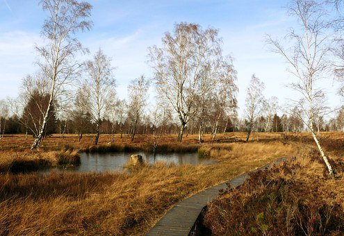 Moor, Landscape, Lake, Pond, Waters, Autumn, Biotope