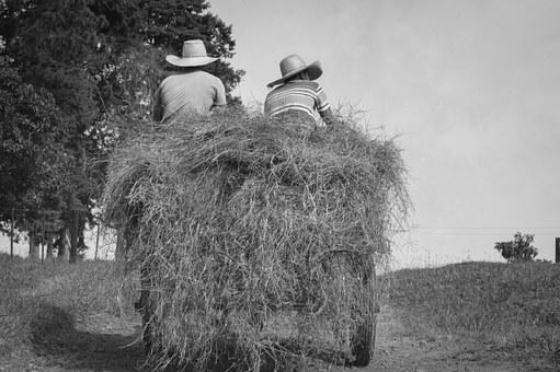 Farm, Buggy, Wagon, Farmer, Cattle, Horse, Mare, Place