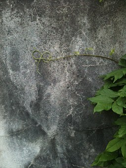 Vine, Curl, Grey, Wall, Tendril, Isolated, Lonely