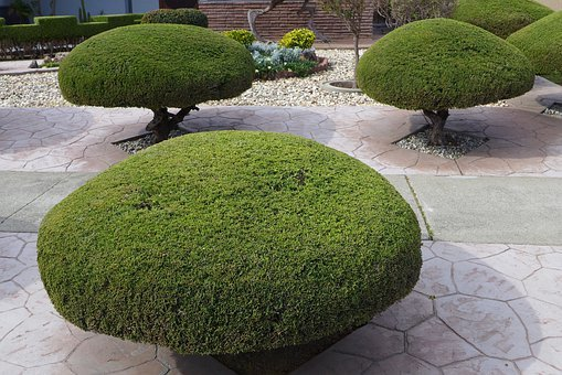 Trees, Trimmed, Shaped, Manicured, Gardening, Trimming