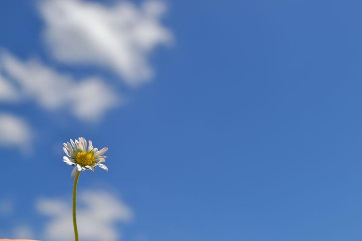 Flower, Květ, Foliage, Leaf, Petals, Floral, Blossom