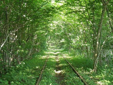 Trolley, Forest, Old Train, Sense