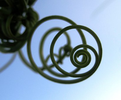 Tendril, Climber, Spiral, Plant, Green, Circles