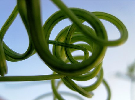 Tendrils, Climber, Green, Curled, Curved, Twisted