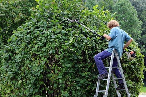 Landscape Gardener, Gardener, Workers, Garden, Hedge