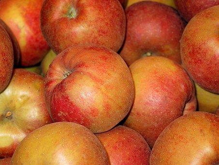 Chalkboard Apple, Apple, Boskoop, Bearing Apple