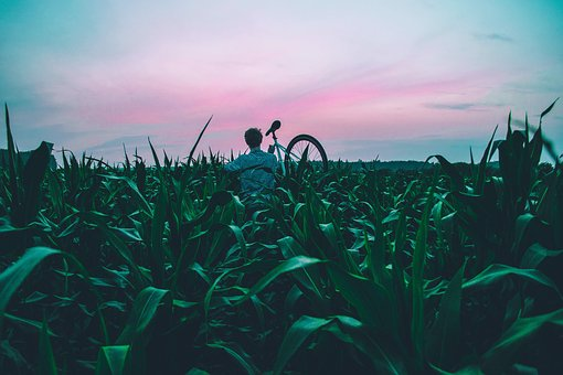 Bicycle, Bike, Cropland, Field, Grass, Landscape