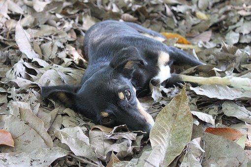 Dog, Leaves, Half Blood, Nature, Animal, Puppy, Pupfish
