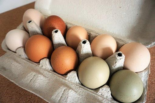 Eggs, Free Range, Organic, Food