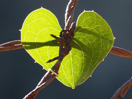 Symbol, Thorned Heart, Locked Heart, Leaf, Barbed Wire