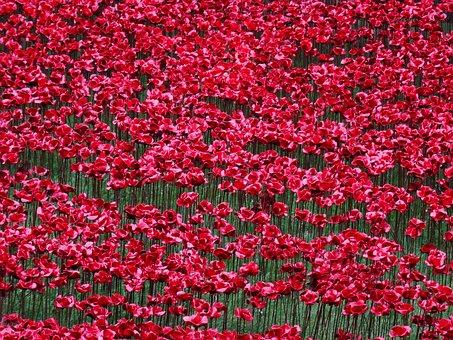Poppies, World War I, Memory, Ceramics, Installation