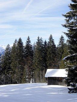 Winter, Snow, Forest, Hut, Nature, Alpine, Riezlern