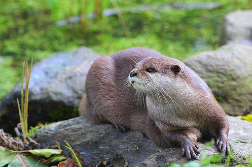 Sun, Nature, Water, Close Up, Otter, Animal, Rest