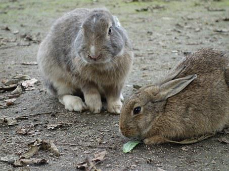 Rabbit, Rabbit Island, Free-range, Lunch